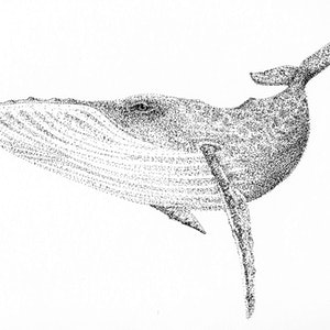(CreativeWork) Whale Watch by Jess Black. drawing. Shop online at Bluethumb.