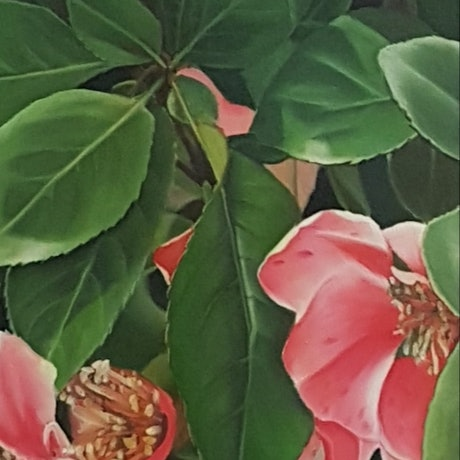 (CreativeWork) the peeping blossoms by Claire Souter. Oil Paint. Shop online at Bluethumb.