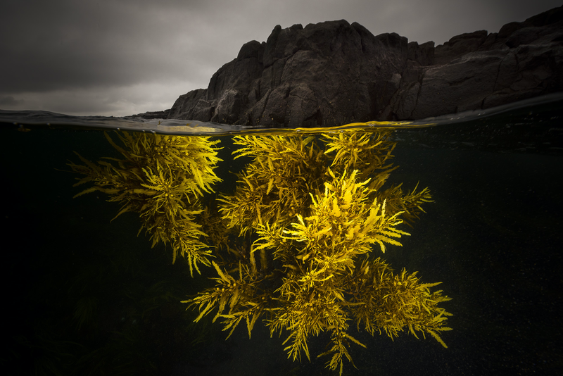 (CreativeWork) A Splash of Yellow by Matty Smith. photograph. Shop online at Bluethumb.