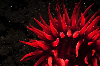 (CreativeWork) Cosmic Anemone by Matty Smith. photograph. Shop online at Bluethumb.