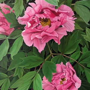 (CreativeWork) the peony by Claire Souter. Oil Paint. Shop online at Bluethumb.