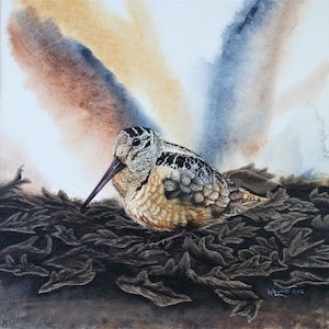 (CreativeWork) American Woodcock by Craig Williams. arcylic-painting. Shop online at Bluethumb.