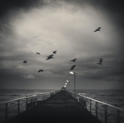 (CreativeWork) Freedom Birds iii by Alex Frayne. photograph. Shop online at Bluethumb.