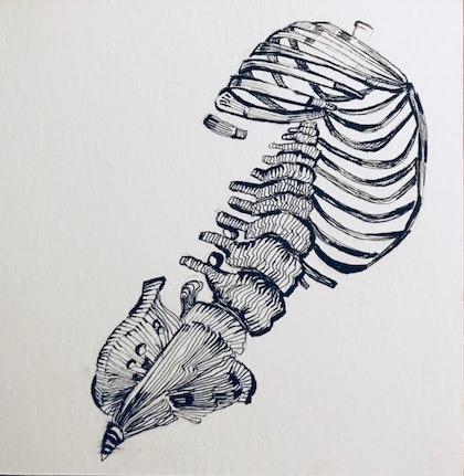 (CreativeWork) Ribs Study - Framed by Sarah Tracton. drawing. Shop online at Bluethumb.