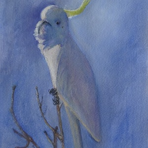 (CreativeWork) Angelic Cockatoo   (re. 1718) by Colin L. Williams. watercolour. Shop online at Bluethumb.
