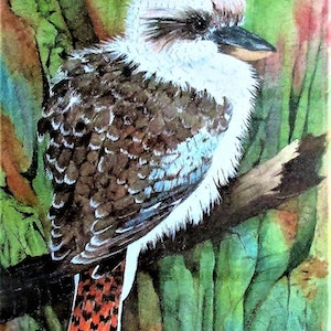(CreativeWork) Baby Kookaburra by John and Michele Hinves. watercolour. Shop online at Bluethumb.