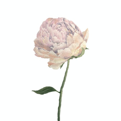 (CreativeWork) A Peony for You by @MCRT. Studio. Oil Paint. Shop online at Bluethumb.