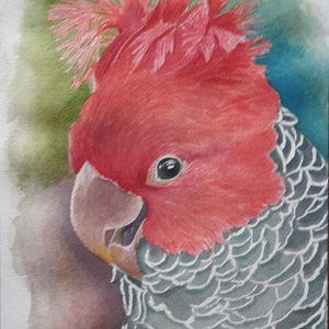 (CreativeWork) Gang-gang cockatoo by Svetlana Cook. watercolour. Shop online at Bluethumb.