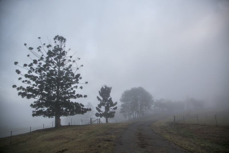 (CreativeWork) Country road in the morning Ed. 1 of 10 by Anna-Riitta Ovaska. photograph. Shop online at Bluethumb.