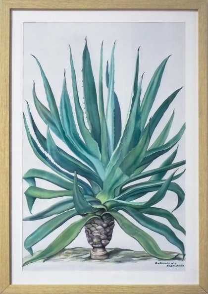 (CreativeWork) Exercises n1 - agave by Aylen Crusta. arcylic-painting. Shop online at Bluethumb.