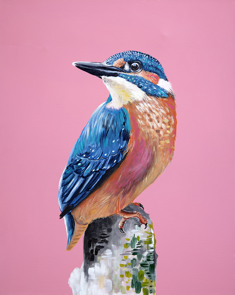 (CreativeWork) Acrylic Kingfisher by HEYLIE MORRIS. arcylic-painting. Shop online at Bluethumb.