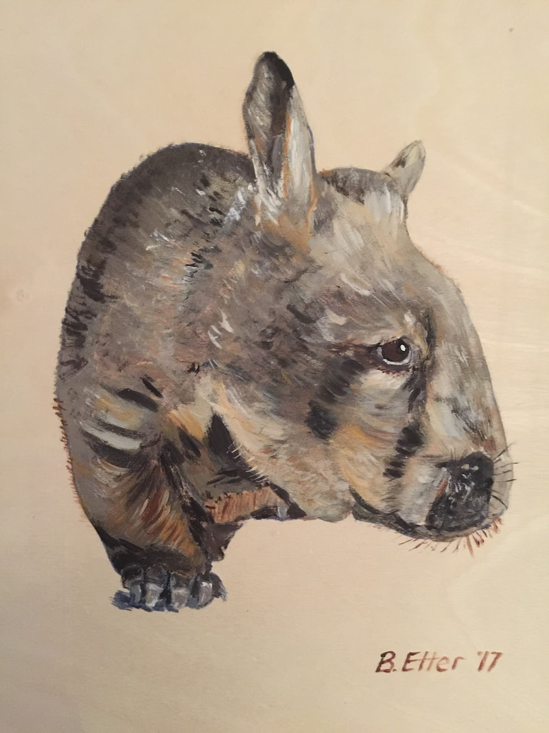 Wombat on Timber