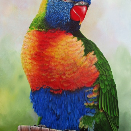 (CreativeWork)  Lorikeet portrait by Debra Dickson. Acrylic Paint. Shop online at Bluethumb.