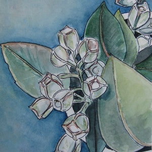 (CreativeWork) Eucalyptus gumnuts in a  bowl #1 by Michelle Pujol. watercolour. Shop online at Bluethumb.