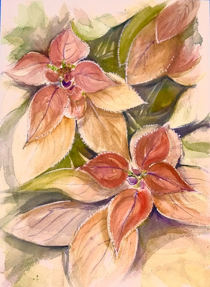 (CreativeWork) Wellington Botanic Gardens , Floral  Display.  by Geoff Stanistreet. watercolour. Shop online at Bluethumb.