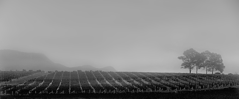 (CreativeWork) Hunter Valley Morning Study#007 Ed. 1 of 1 by Simon Mitrovich. photograph. Shop online at Bluethumb.