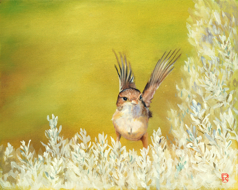(CreativeWork) White Fronted Wren - Limited Edition by Rhonda Armistead. print. Shop online at Bluethumb.