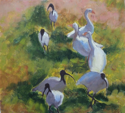 Ibis and Geese  - Copy