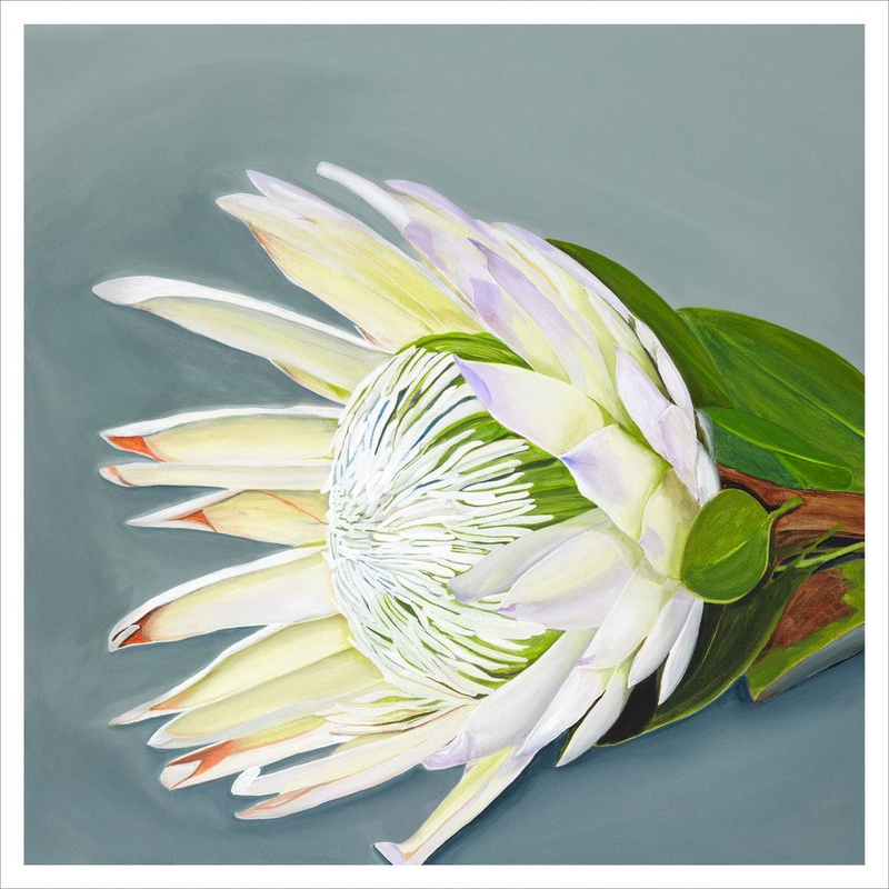 (CreativeWork) King Protea Limited Edition Large Print incl matte board Ed. 11 of 100 by Hayley Kruger. print. Shop online at Bluethumb.