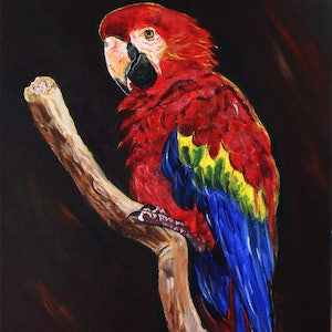 (CreativeWork) Red Macaw by Julie Hollis. arcylic-painting. Shop online at Bluethumb.