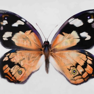 (CreativeWork) Flutterby by Dan Wenn. other-media. Shop online at Bluethumb.