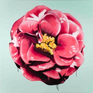 (CreativeWork) Pink Camellia by Dan Wenn. mixed-media. Shop online at Bluethumb.
