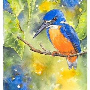 (CreativeWork) Azure Kingfisher by Rebecca Phillips. watercolour. Shop online at Bluethumb.