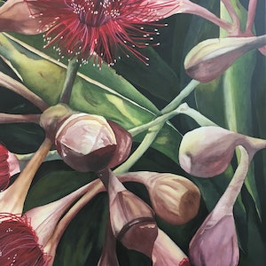 (CreativeWork) Flowering Gumnuts 1 by Julie Christensen. watercolour. Shop online at Bluethumb.