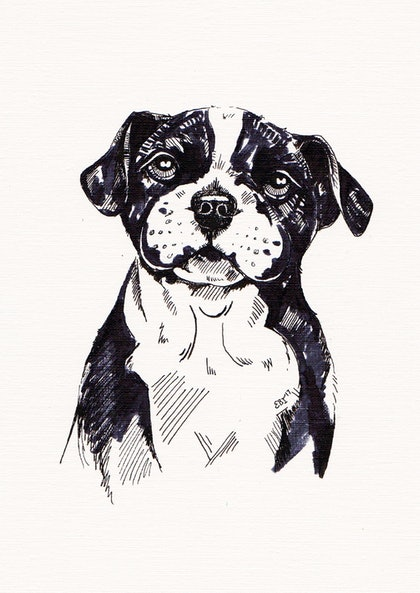 Staffy Pup Sketch - Framed
