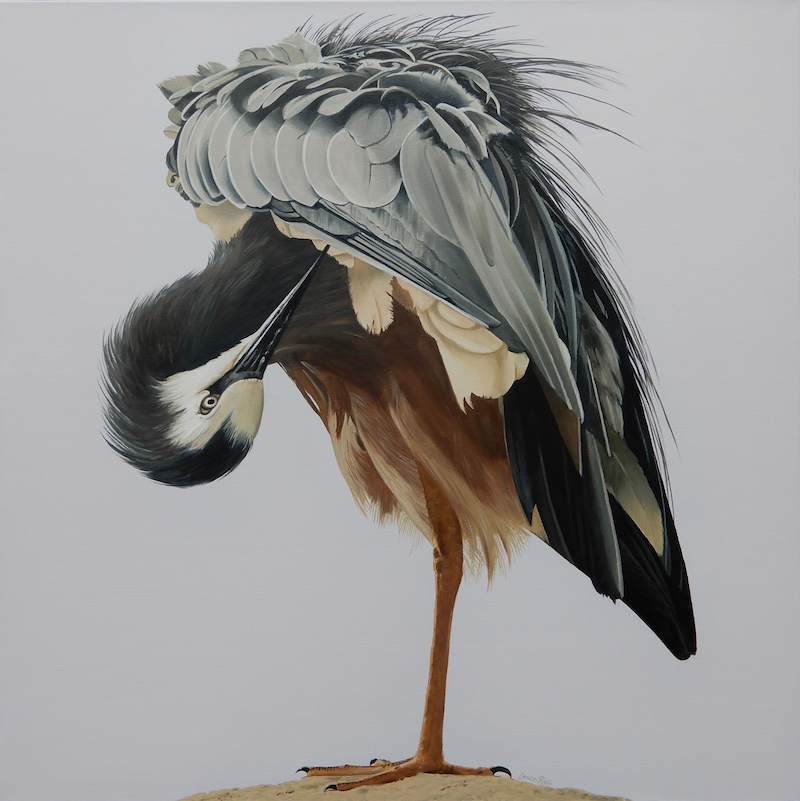 (CreativeWork) White-faced Heron by Lance Ross. oil-painting. Shop online at Bluethumb.