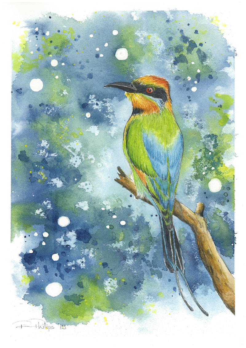 (CreativeWork) Rainbow Bee-eater by Rebecca Phillips. watercolour. Shop online at Bluethumb.