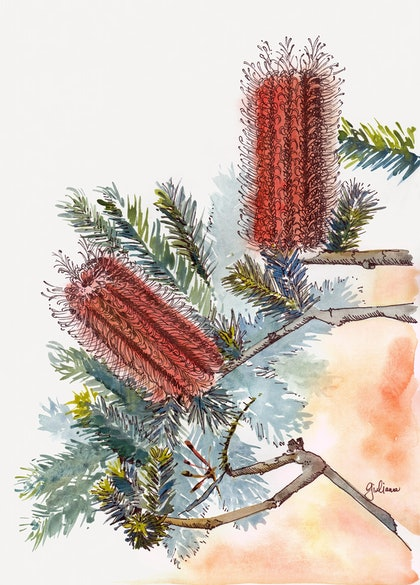 (CreativeWork) Banksia Impressions IV by Giulianna Del Popolo. watercolour. Shop online at Bluethumb.