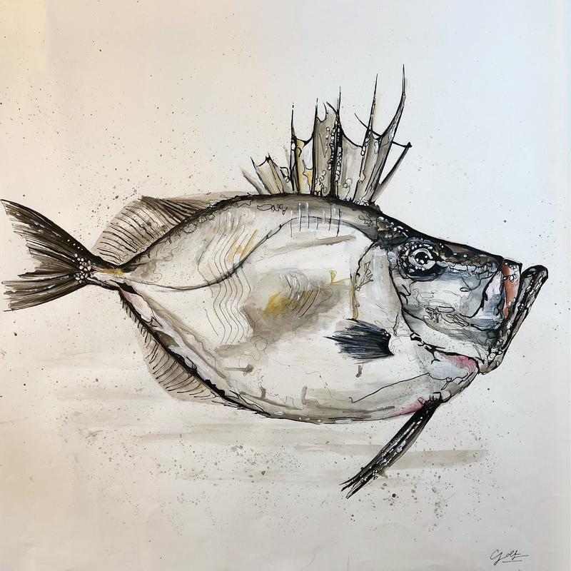 (CreativeWork) Sir John Silver Dory by Silvia Rubboli Golf. other-media. Shop online at Bluethumb.