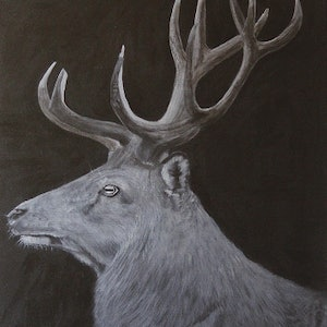 "(CreativeWork) ""The Stag"" by Dennis Heape. arcylic-painting. Shop online at Bluethumb."