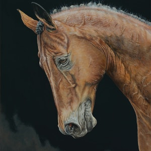 (CreativeWork) Silent Gaze - Brown Horse Portrait ORIGINAL by Dario Zanesco. oil-painting. Shop online at Bluethumb.