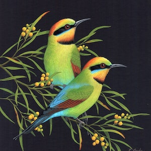 (CreativeWork) Rainbow Bee-eaters by Lyn Cooke. watercolour. Shop online at Bluethumb.