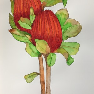 (CreativeWork) Budding Banksias by Kirsty Anderson. watercolour. Shop online at Bluethumb.