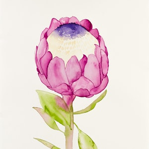 (CreativeWork) Pink Protea by Kirsty Anderson. watercolour. Shop online at Bluethumb.
