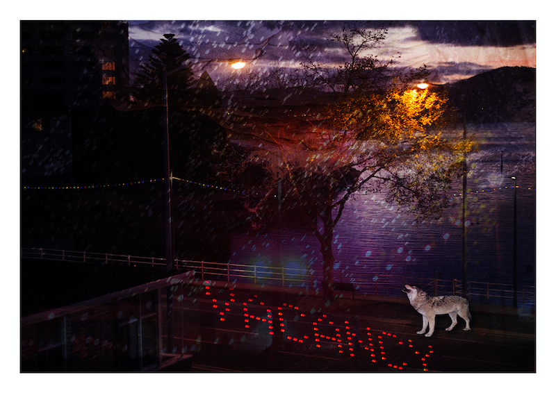 (CreativeWork) Lone Wolf by Sarah Grace. photograph. Shop online at Bluethumb.