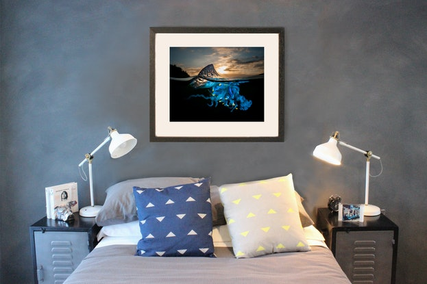 (CreativeWork) A Shock of Blue Ed. 15 of 100 by Matty Smith. Photograph. Shop online at Bluethumb.