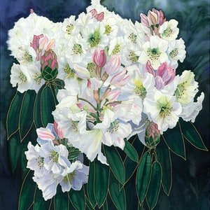 (CreativeWork) White Rhododendrons Ed. 1 of 30 by Gillian Radford. print. Shop online at Bluethumb.