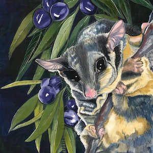(CreativeWork) possum Ed. 1 of 50 by Gillian Radford. print. Shop online at Bluethumb.