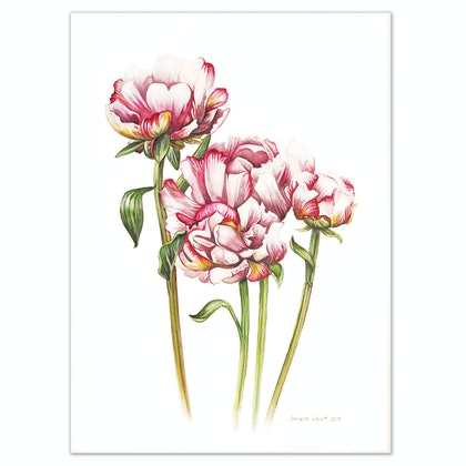 (CreativeWork) Pretty Peonies  painting - Limited edition print  Ed. 1 of 100 by Darlene Lavett. print. Shop online at Bluethumb.