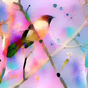 (CreativeWork) Treetop Dreaming - Willy Wagtail Ed. 1 of 10 by Wendy Goodwin. print. Shop online at Bluethumb.