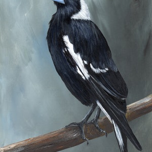 (CreativeWork) Australian Magpie by Janet Graham. arcylic-painting. Shop online at Bluethumb.