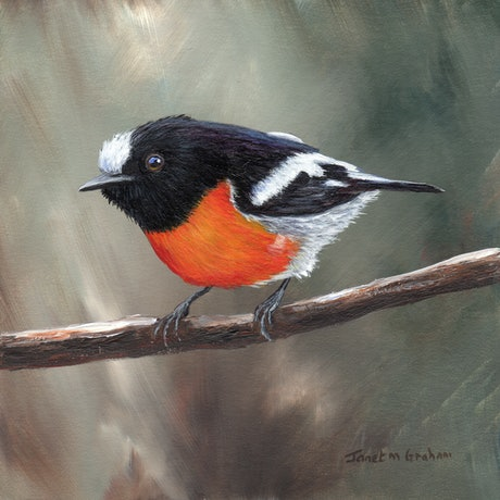 (CreativeWork) Scarlet Robin by Janet Graham. Acrylic Paint. Shop online at Bluethumb.