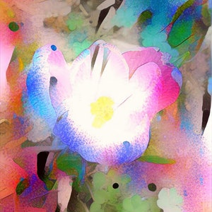 (CreativeWork) Floral Dreaming - Spring Crocus Ed. 1 of 10 by Wendy Goodwin. print. Shop online at Bluethumb.