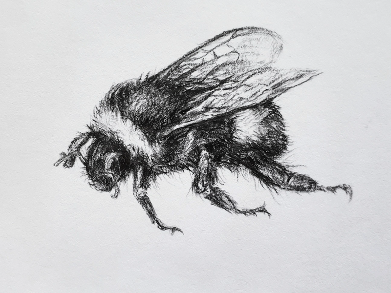 (CreativeWork) Save The Bee by Victoria ter Kuile. drawing. Shop online at Bluethumb.
