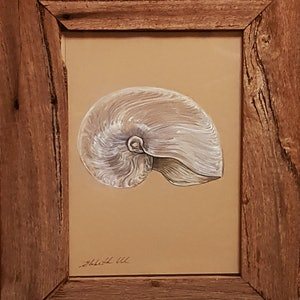 (CreativeWork) Nautilius Shell by Liz H LOVELL. drawing. Shop online at Bluethumb.
