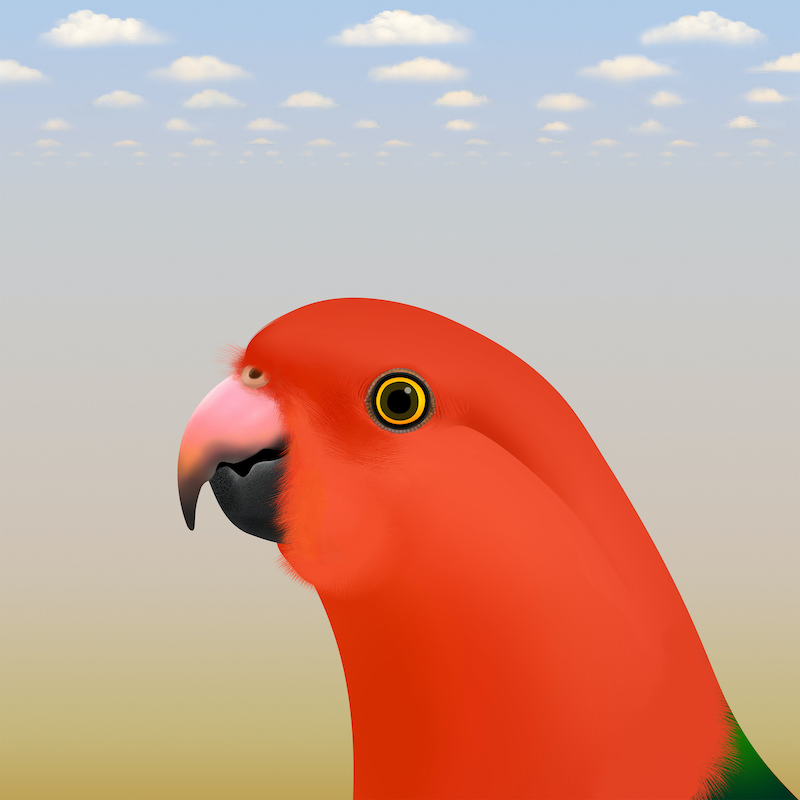 (CreativeWork) King Parrot Ed. 10 of 20 by Kim Lynch. print. Shop online at Bluethumb.